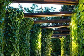 Pergole extrem de simple pentru plantele agatatoare
