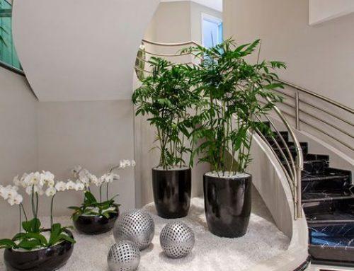 Asigurati un spatiu necesar pentru plantele decorative